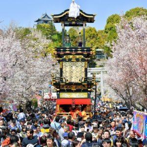 日本爱知犬山祭举行 樱花树下欣赏花车巡游