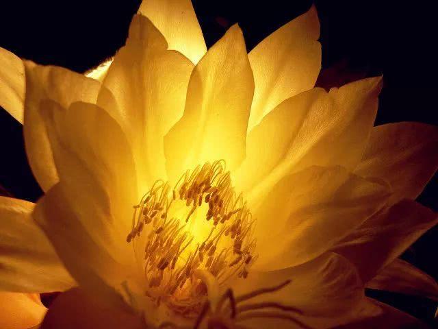 """佛经中""""出镜率""""最高的这三种花,你认识吗?"""