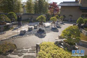 世界园林巡礼——日本大宫盆栽美术馆