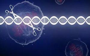 日本施行受精卵基因组编辑指针 仅用于生殖医疗基础研究