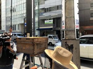 东京繁华街区·惠比寿出现上万只蜜蜂 吓坏路人
