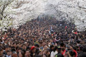 【日本赏樱超吸金】2个月创1800亿商机6300万人朝圣