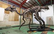 日本国内最大鹉川恐龙全身化石模型已复原完毕