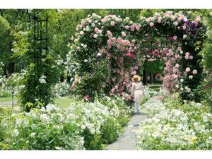 豪斯登堡「玫瑰节」开跑徜徉130万朵玫瑰花海!