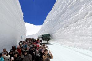 高达16米!日本立山黑部雪墙回廊贯通吸引大量游客