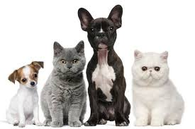 日媒:日企热衷发中国宠物财