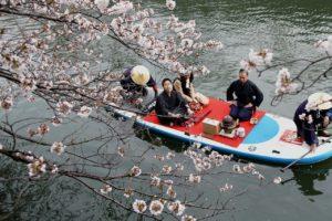 请人占位、租帐篷席从数字看日本樱花季商机