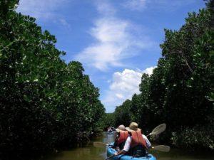冲绳必玩户外活动 红树林独木舟体验