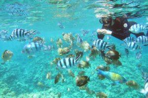 冲绳必玩户外活动 青洞浮潜