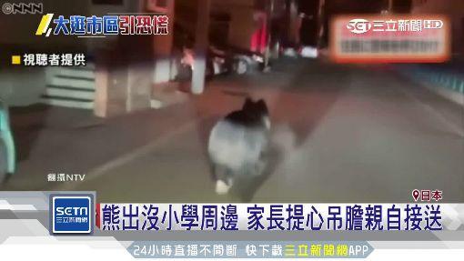 一早开车撞上熊!北海道爆「熊熊危机」 车主:车凹进去了