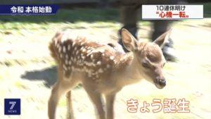 """奈良喜迎""""令和""""小鹿新生命"""