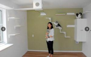 日本爱猫社长设计出猫咪风格的新式住宅 打造人猫和谐共处空间