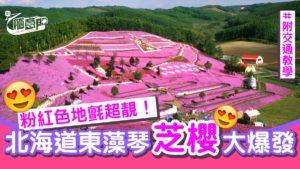 【北海道自由行】5月必睇!东藻琴公园芝樱绝景附5大打卡位