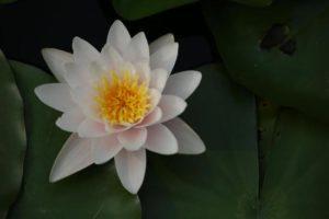 如何理解佛教的空和有