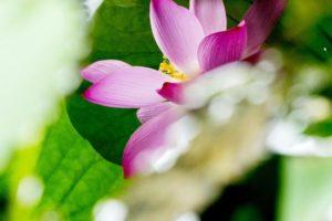 阿姜查禅师:心的平衡与中立