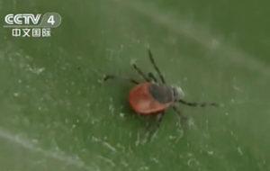 东京都首次出现蜱虫感染症 可能在长崎旅游时被叮咬
