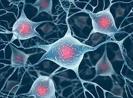 日本研究团队在哺乳动物脑内发现传递甜味的神经细胞