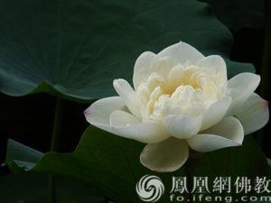 佛教故事:伟大的母爱使他终于成为一个真正的禅者!