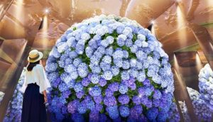 【长崎】豪斯登堡紫阳花祭