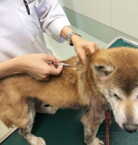 日本拟修改动物爱护法规定需给宠物植入芯片
