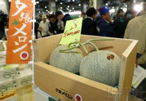 北海道夕张甜瓜今年首拍成交价创新高