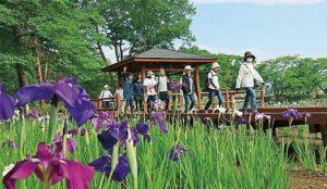 福岛:第16届镜石菖蒲花祭