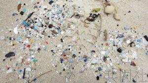 """日本团队确认""""微塑料""""有害物质积聚于贝类体内"""