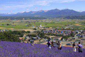 夏季观光胜地的北海道富良野逐渐演变成四季型旅游目的地