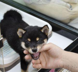 日本新《动物爱护法》成立 给猫狗植入芯片成义务