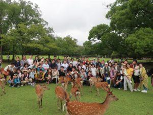 号角唤鹿看鹿群飞奔日本奈良独有活动登场