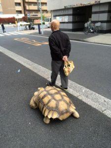 散步要2小时!光头老伯出门「遛乌龟」 网惊呆:是龟仙人