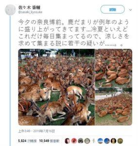 神秘聚会!每年7月才看得到百只奈良鹿聚集塞爆草皮