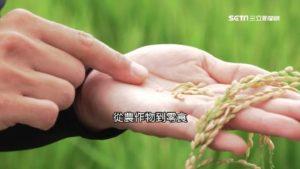暖化重创日农产!越光米、薯条三兄弟未来恐难吃到