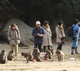 宫崎县幸岛的马骝识得洗蕃薯?