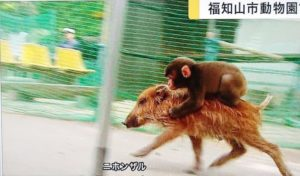 日动物园一猕猴失踪9日后寻回 园长:它在反省