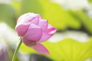 什么是佛教说的三身与四智