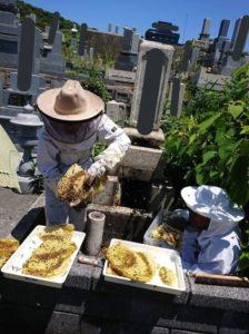 小龙女的玉蜂?日本墓地挖出白色蜂巢方丈大啖:好好吃的蜂蜜