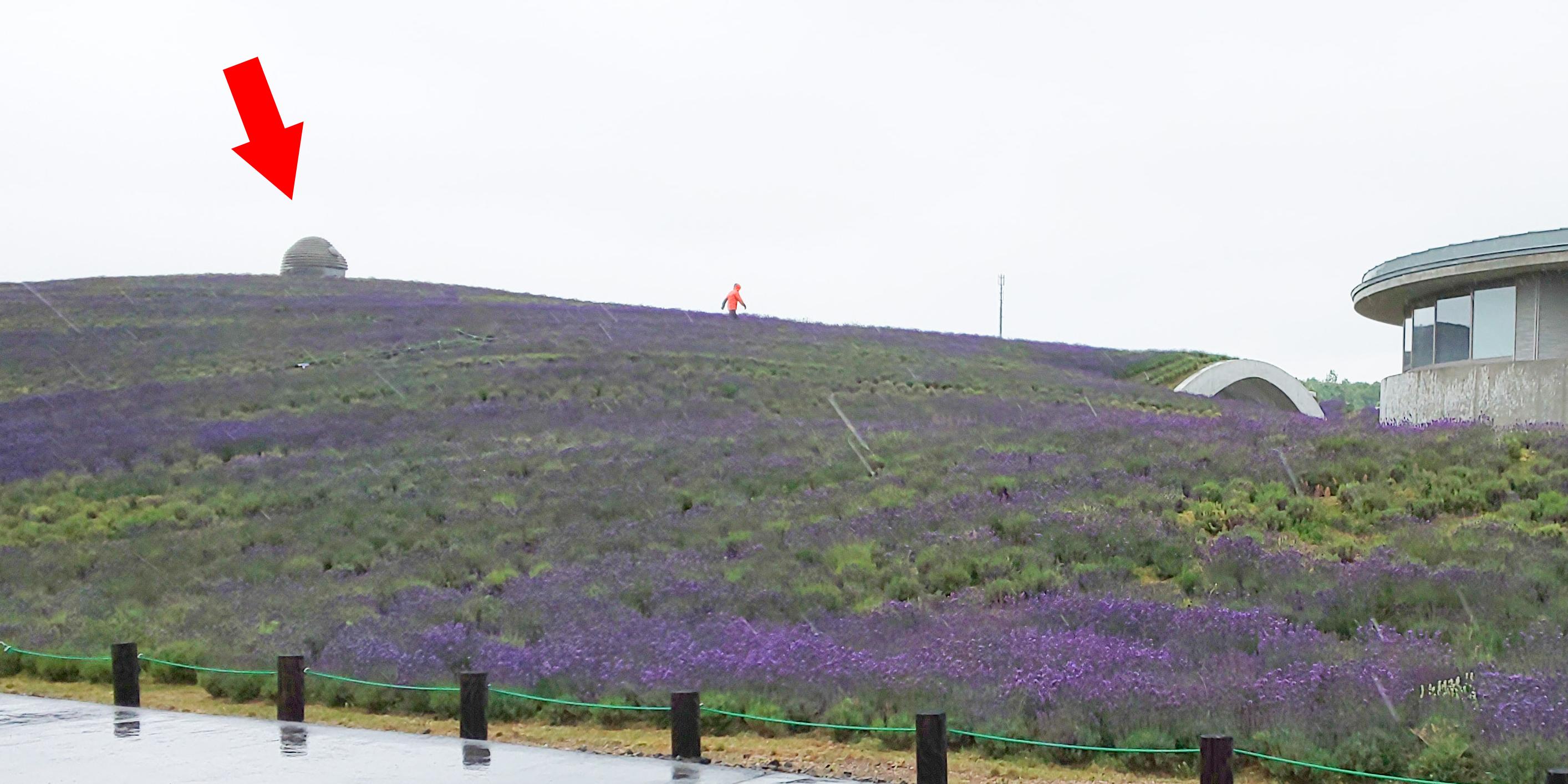 ラベンダーの丘にちょこっと顔を出す頭大仏殿(北海道札幌市南区)【連載:アキラの着目】