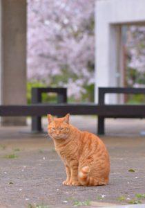 【浪浪生活】3年后重遇惊见小橘猫变胖橘猫网民:岁月不留人