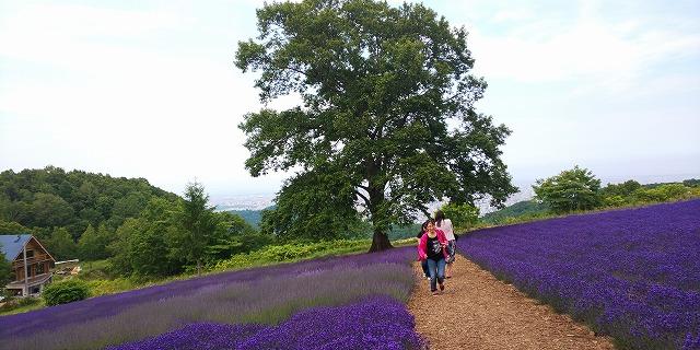 ラベンダーの絨毯と眼下の札幌絶景~幌見峠ラベンダー園~【連載:アキラの着目】
