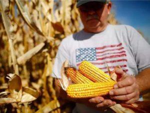 日本拟追加进口美国玉米 受美中对立影响