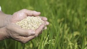 详讯:日本2018年度粮食自给率37% 跌至低位