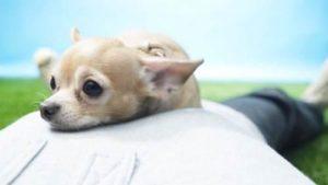 日本宠物殡葬业扩展:有葬礼服务还有悼念咖啡馆