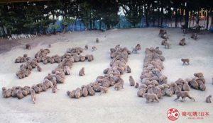 滨海的「淡路岛猴子中心」窥探猴子家族生态