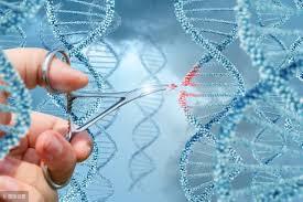 日本厚劳省10月起接受基因编辑食品销售事前咨询