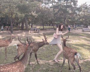正妹奈良喂鹿遭围咬裙网友笑:这鹿是老司机
