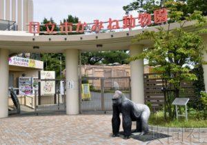 热点:日本多地为租借大熊猫展开激烈竞争