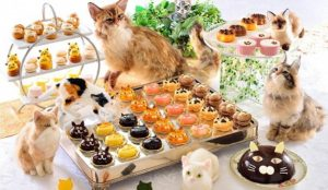 吉祥寺猫咪祭2019