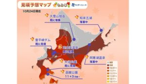 北海道地区枫红状况