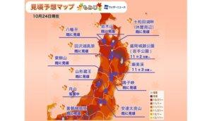 东北地区枫红预测